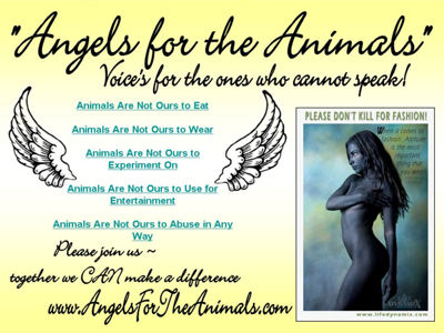 Angels For The Animals